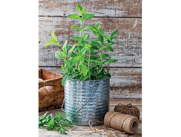 grown your plant in silver tin plant pot on wooden bench