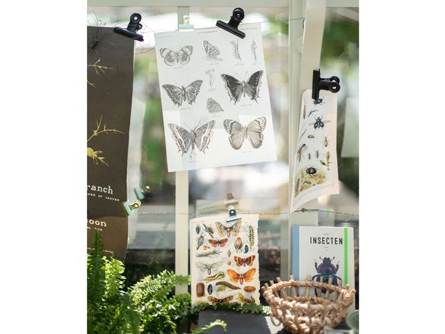 Entomology insects drawings and sketches in the Alitex greenhouse styled by Selina Lake at Chelsea Flower Show 2019
