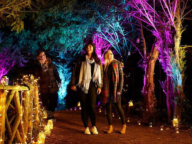 audleyend - 8 of the best Christmas light trails - inspiration - goodhomesmagazine.com