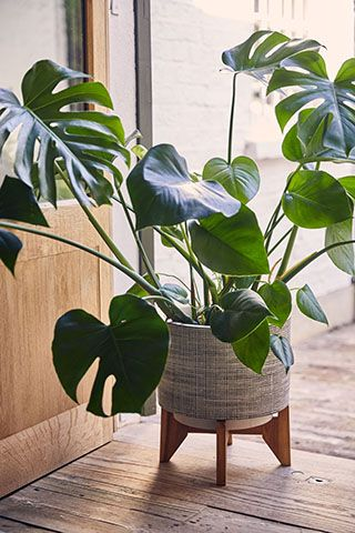 ceramic indoor planter - habitat launches garden furniture collection with The Rich Brothers - news - goodhomesmagazine.com
