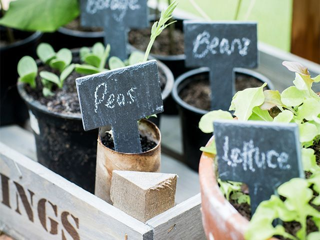 growing veg in greenhouse - how a greenhouse can help your own veg - garden - goodhomesmagazine.com