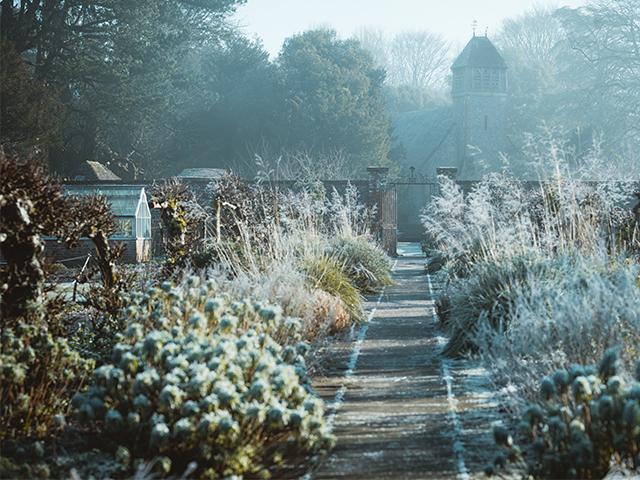 winter garden scene